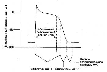 Рефрактерные периоды (РП) кардиомиоцита
