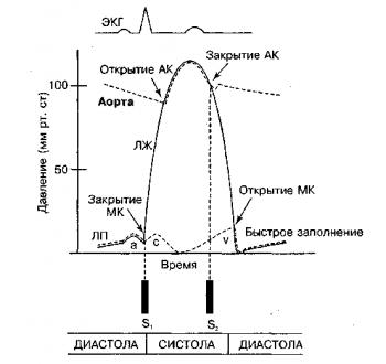 Нормальный сердечный цикл, показывающий взаимосвязь изменений давления в левых камерах сердца