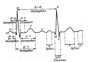 ЭКГ норма. Элементы нормальной электрокардиограммы