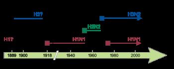 Грипп. Основные типы вирусов у людей. Сплошные квадраты показывают, появление нового штамма, вызывая периодические пандемии гриппа. Пунктирные линии указывают на неопределенность идентификации штамма