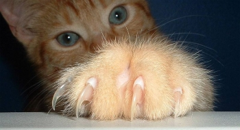 Кошки могут передавать бешенство через царапины
