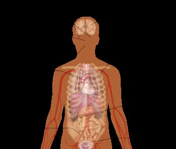 Симптомы анафилактического шока